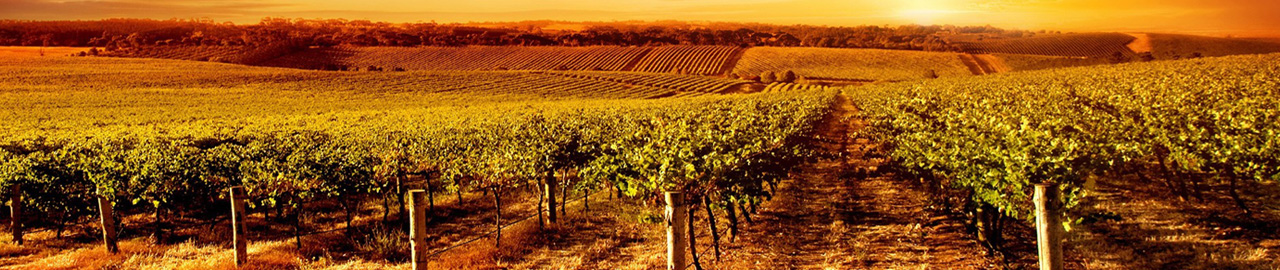 wallpaper-background-vineyard-earth-wallpapers_1920x1080_sc